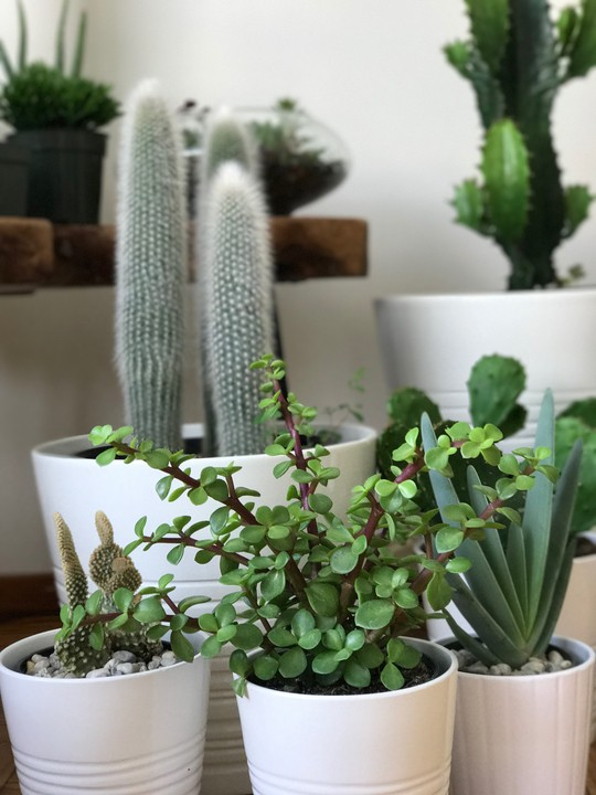 Home staging tips for midcentury modern design: use potted plants of varying heights to create interesting focal points.