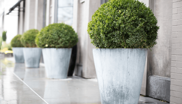 Planters used to improve curb appeal.