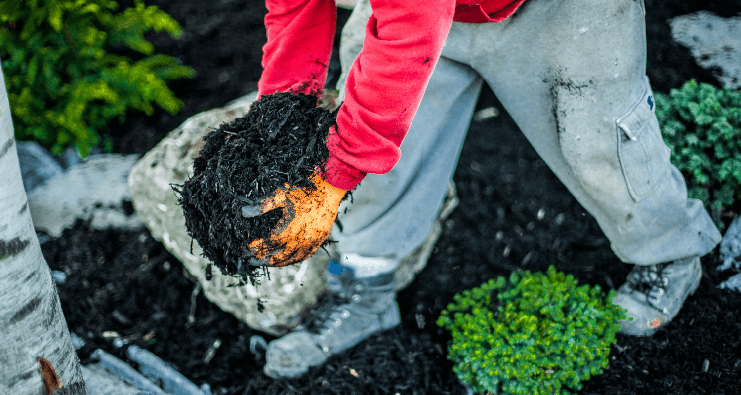 Revive Your Curb Appeal With 5 Budget Friendly Landscaping Projects