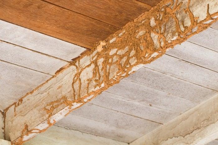 pest infestations home inspectors look for