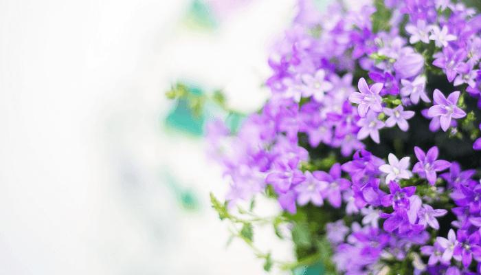 purple curb appeal flowers