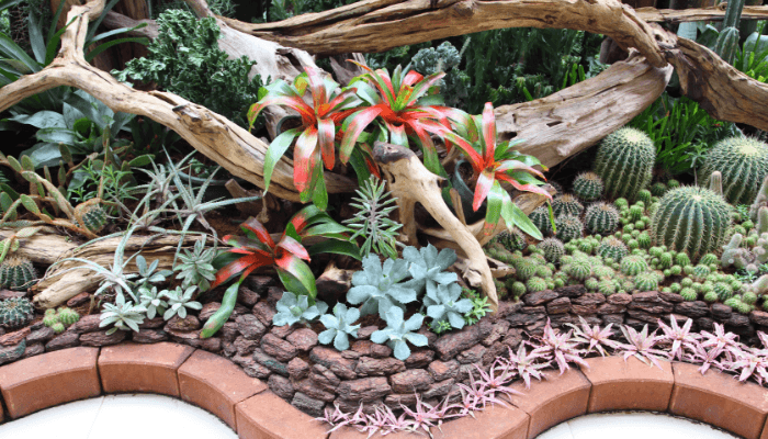 A succulent garden is quick and easy curb appeal.