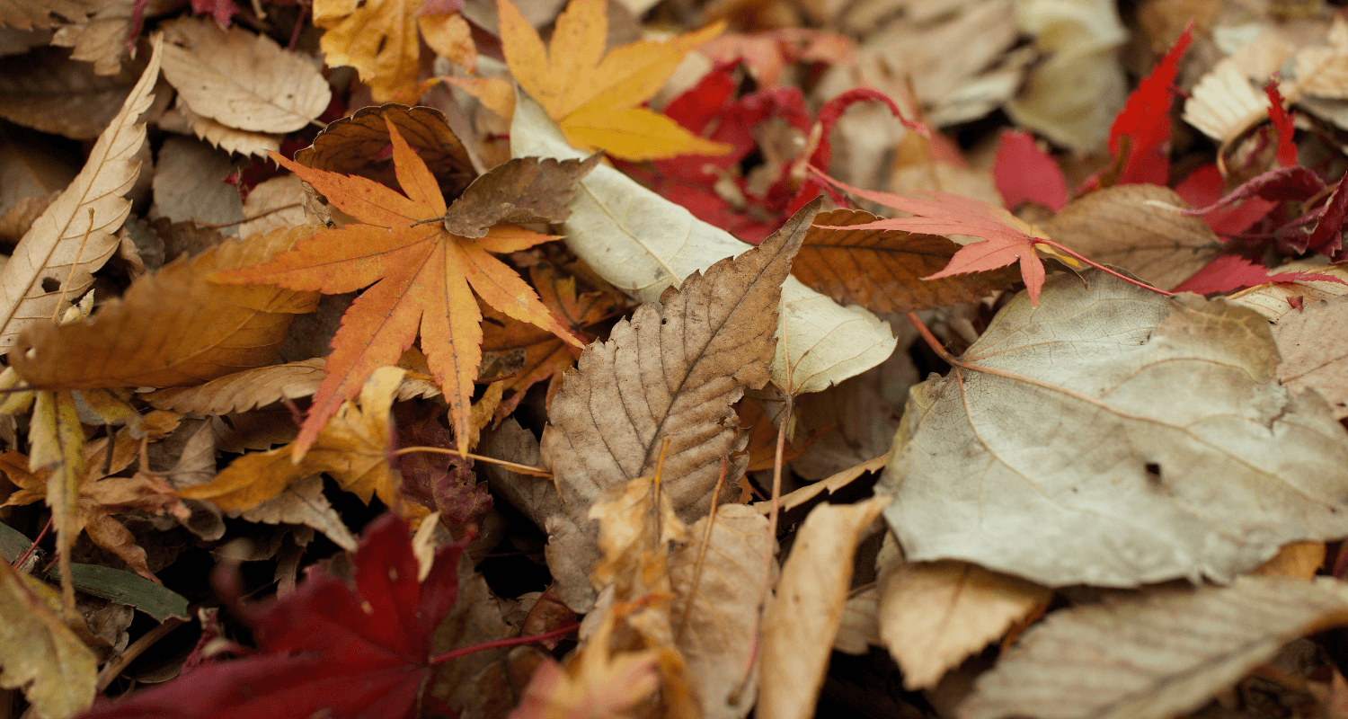 Fall leaves need to be maintained in home.