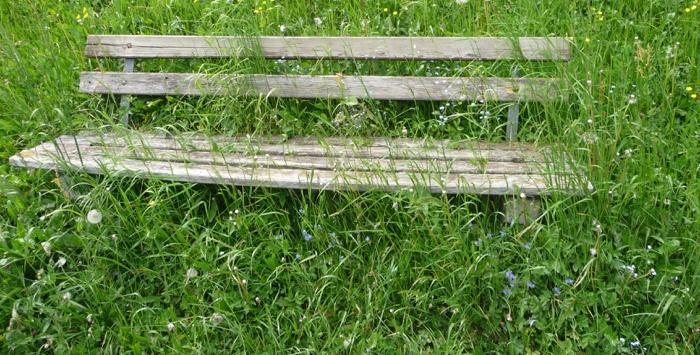 Bench in overgrown yard of house in probate.