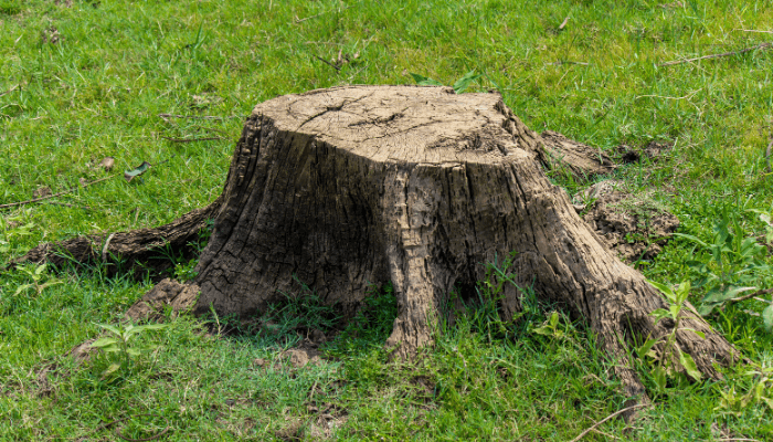 A tree stump near a house you can buy.