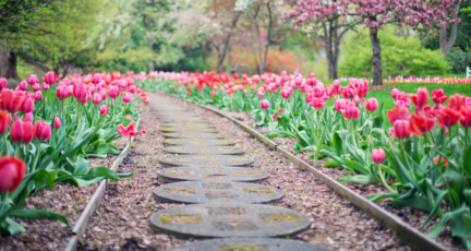 A brick path lined with tulips, landscaping that could add value.