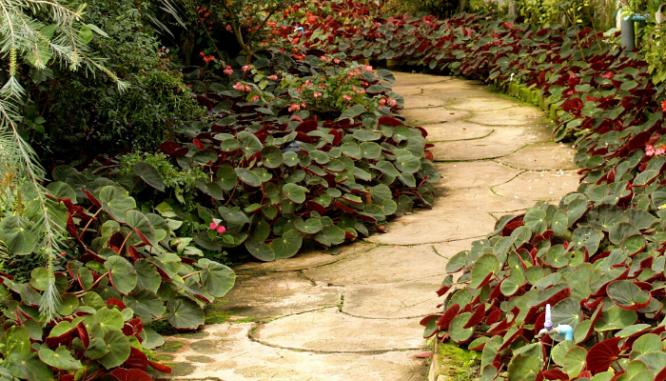 A white stone pathway through tropical foliage groundcover.